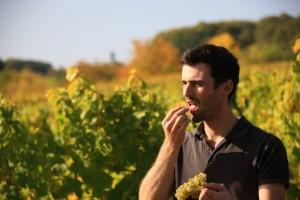 Wein(seligkeiten) Pfalz - Weingut Brendel - Grauburgunder