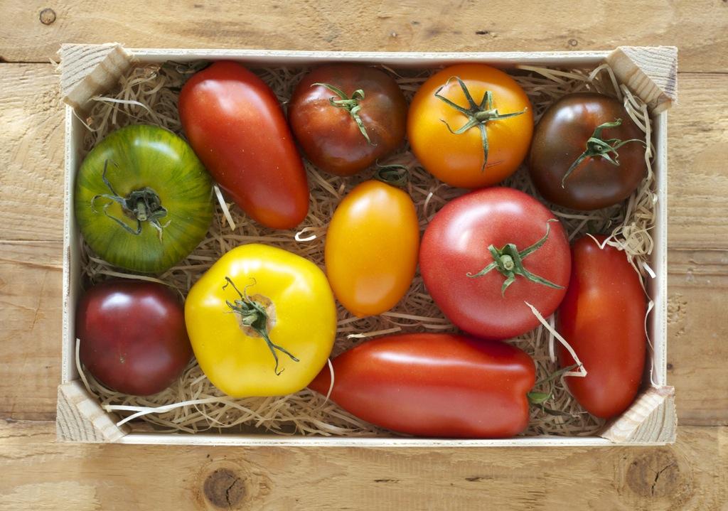 Buntes Tomaten-Carpaccio mit Jakobsmuscheln