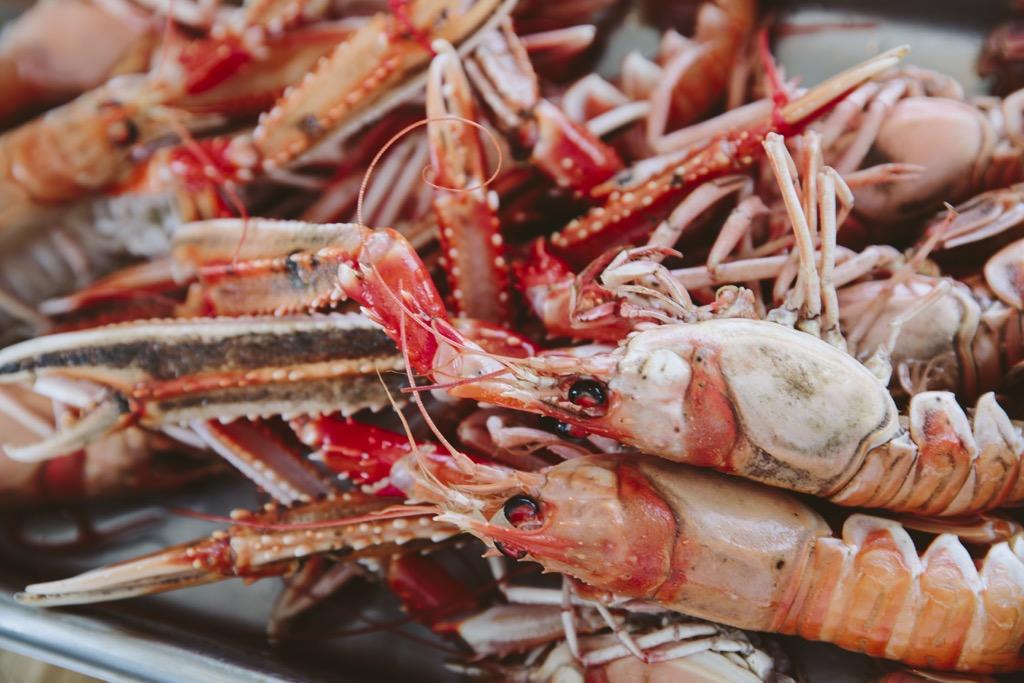 Cornelius-Fischrestaurant-Oyster-Dundee-Norwegen-kaisergranat