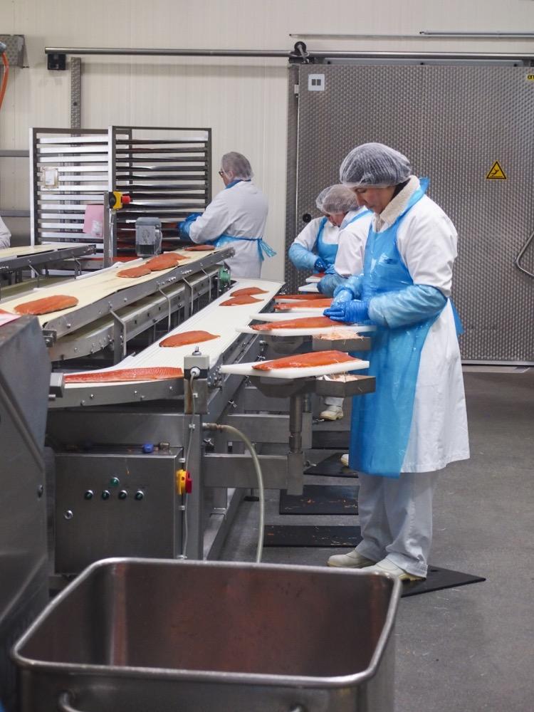 Fischmanufaktur Müritz Weiterverarbeitung vom gebeizten Lachs