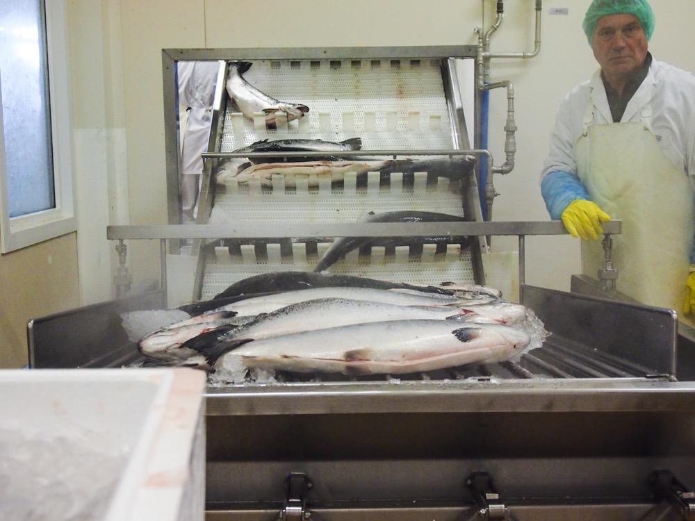 Fischmanufaktur Müritz frischer Lachs