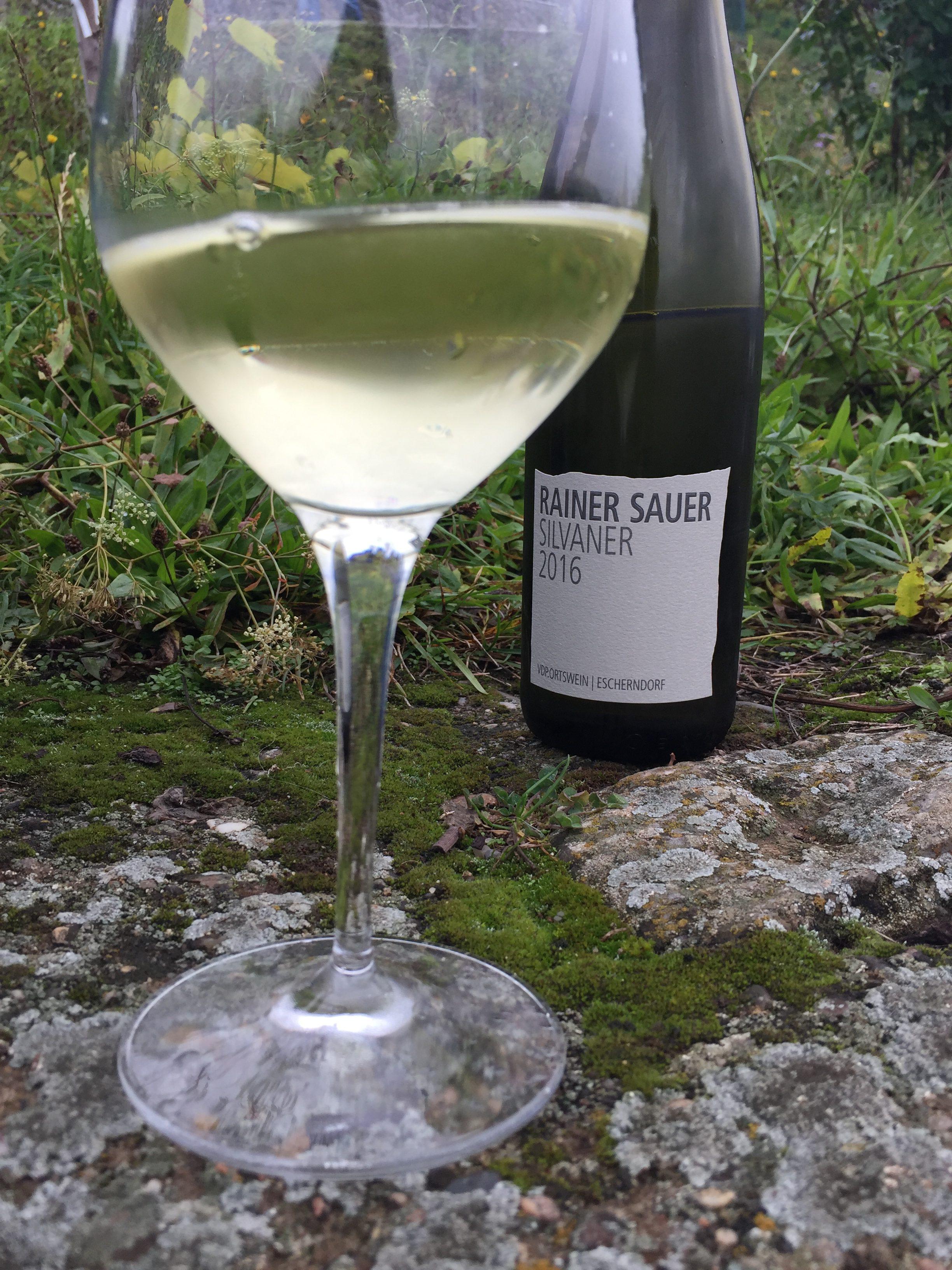 Weingut_Sauer_Verkostung