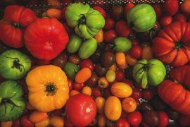Tomaten_bunte