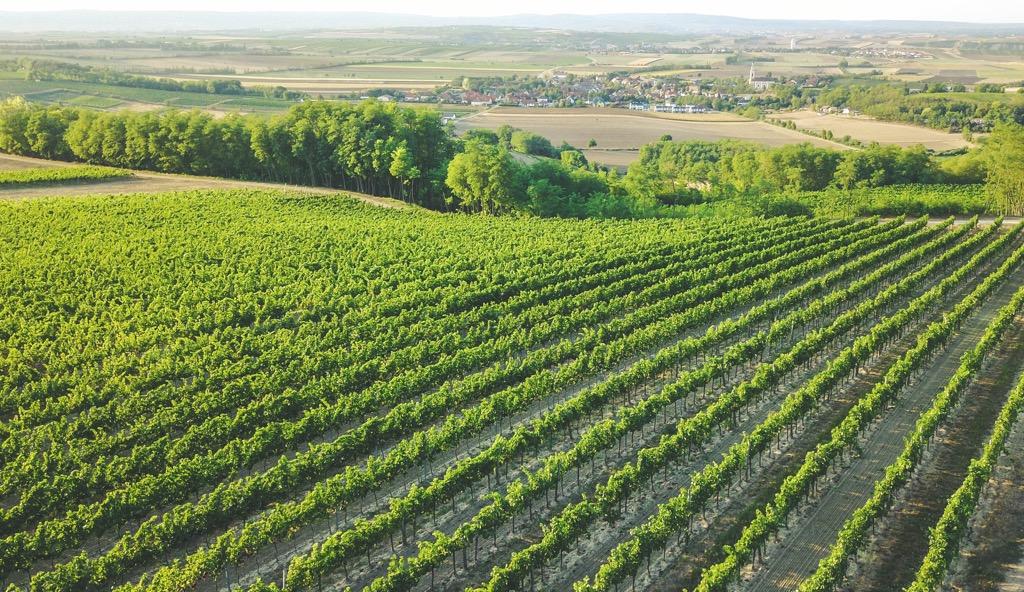 Weinviertel Österreich